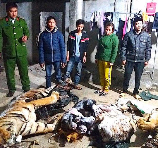 Hai cá thể hổ bị lực lượng công an phát hiện tại trang trại của ông Nguyễn Văn Huệ
