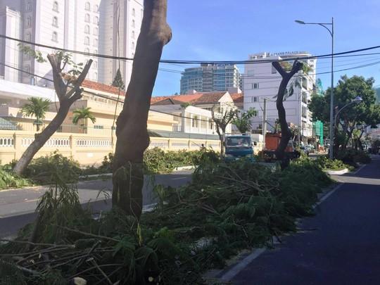 TP Nha Trang đào hàng loạt cây xanh mở rộng đường - Ảnh 1.