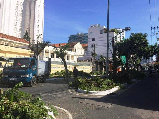 TP Nha Trang đào hàng loạt cây xanh mở rộng đường - Ảnh 2.