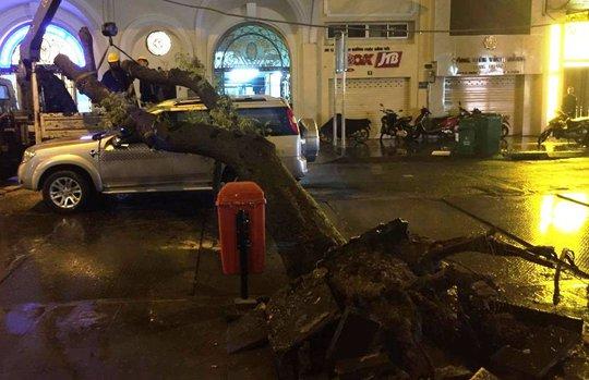 Cây xanh bị gió giật đổ, đè lún ô tô ở trung tâm Sài Gòn - Ảnh 1.