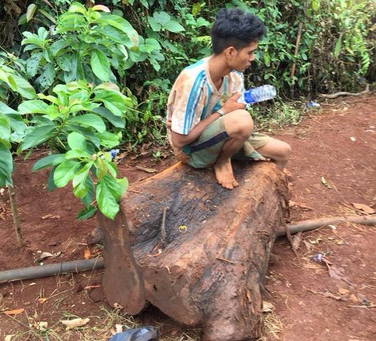 Đột nhập khu bảo tồn, cưa hạ cây thủy tùng 500 tuổi - Ảnh 2.
