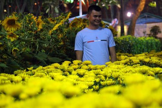 Hoa cúc từ miền Tây cũng góp mặt khoe sắc tại công viên 23 - 9. Theo các chủ gian hàng,loại hoa này bán rất chạy với giá từ 50.000 -200.000 đồng/ chậu.