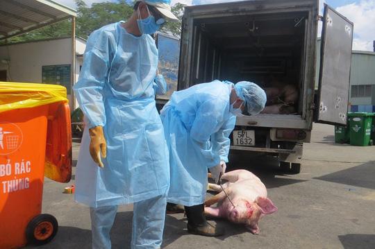 Cán bộ thú y không tiếp tay vụ 3.750 con heo bị tiêm thuốc an thần - Ảnh 1.
