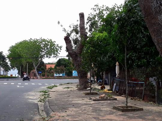 Côn Đảo, Cần Giờ: Nghỉ học, ngừng chợ, di dân chống bão số 16 - Ảnh 9.