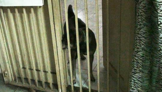 Lý giải chuyện cấm nuôi chó, mèo ở chung cư Sài Gòn - Ảnh 1.