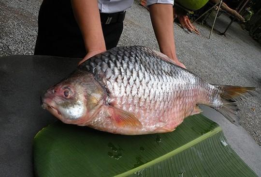 Cá duồng bay, đặc sản Đồng Nai là sinh vật thế nào? - Ảnh 3.
