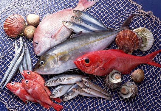 Cá đồng và cá biển: loại nào giàu chất dinh dưỡng hơn? - Ảnh 2.