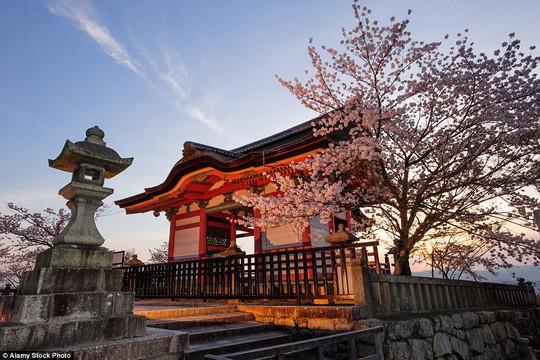 Nhật Bản đặc biệt quyến rũ vào mùa xuân khi hoa anh đào nở rộ. Bức ảnh chụp tại chùa Kiyomizu-dera ở TP Tokyo. Ảnh: Alamy Stock Photo