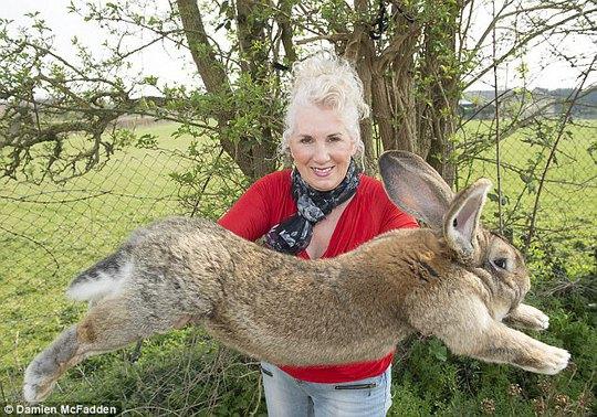 Bà Edwards cùng chú thỏ lớn nhất thế giới Darius (bố của thỏ Simon). Ảnh: Daily Mail