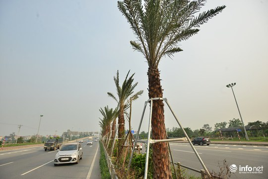 Vị đại diện này cũng cho biết, dự án trồng hàng cây chà là này nằm trong quy hoạch đã được phê duyệt nhằm hoàn thiện trục đường chính của Cảng hàng không Quốc tế Nội Bài, đồng thời góp phần hoàn chỉnh mạng lưới giao thông Thủ đô, tạo hình ảnh đẹp của Hà Nội cho du khách nước ngoài.