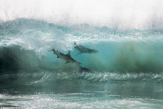 Kinh hoàng nhóm học sinh bơi lội bên trên 400 con cá mập - Ảnh 6.