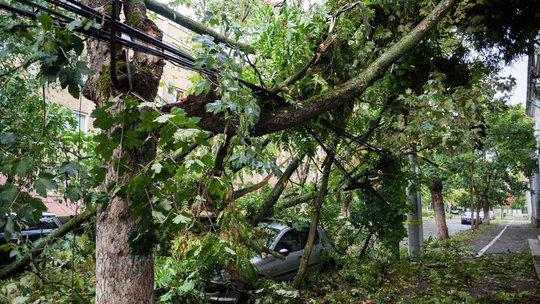 Dự báo mưa lại xảy ra bão, làm 75 người thương vong - Ảnh 2.