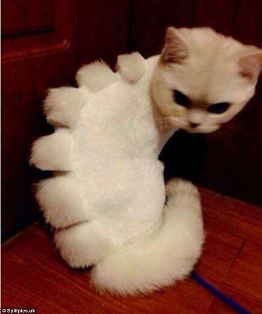 Những chú mèo có bộ lông độc đáo ai cũng phải bật cười - Ảnh 4.