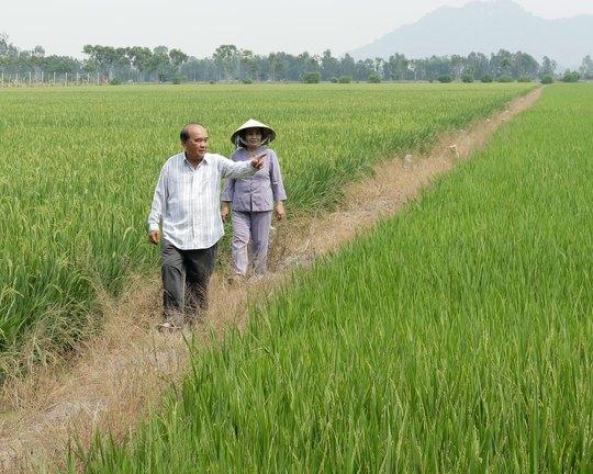 Vợ chồng ông Nguyễn Quốc Hùng thăm đồng. Ảnh dưới: Nông dân tỉ phú Đoàn Văn Thi.Ảnh: LONG HỒ - CA LINH