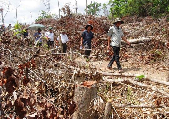Bỏ lọt tội nhiều cán bộ tiếp tay phá rừng - Ảnh 1.