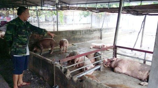 Dịch bệnh gia súc, gia cầm trở lại - Ảnh 1.