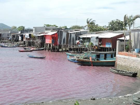 Hiện tượng nước hồ chuyển thành màu tím được xác định do tảo nở hoa Ảnh: NGỌC GIANG