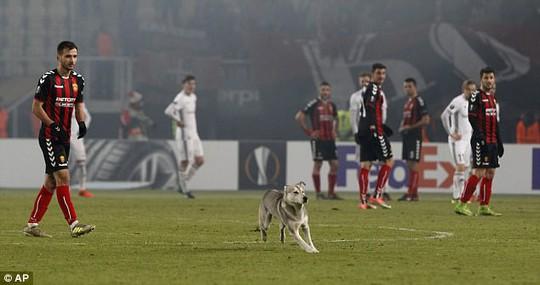 Chó làm gián đoạn trận đấu ở Europa League - Ảnh 1.