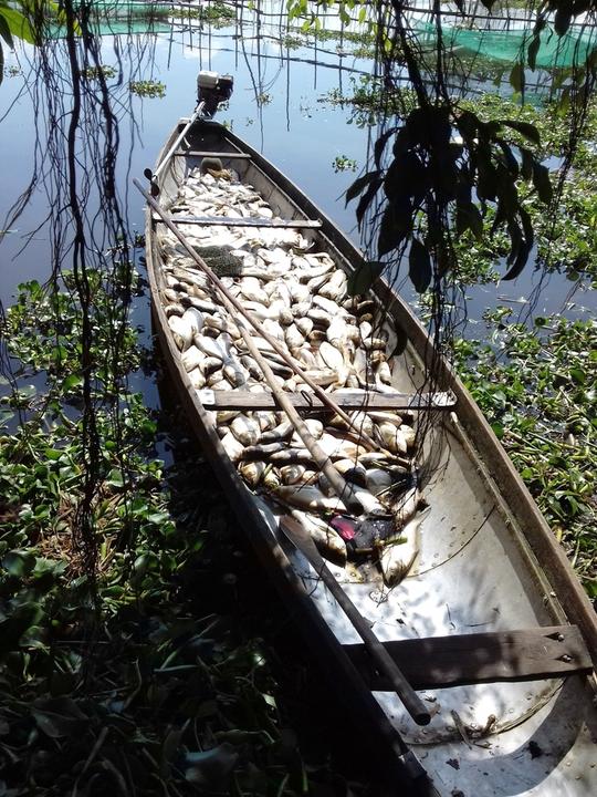 Gần 40 tấn cá chết, nhiều người trắng tay - Ảnh 1.