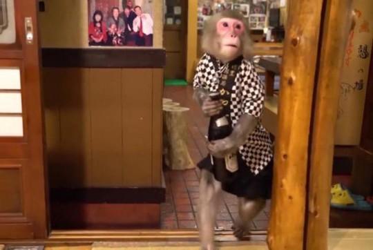 Quán bar Nhật Bản gây sốc với bồi bàn là khỉ - Ảnh 5.