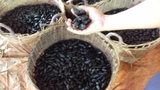 Cưỡng chế xưởng sản xuất cau chui có lao động Trung Quốc - Ảnh 5.