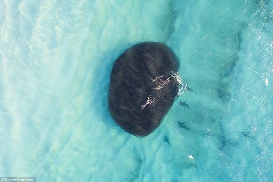 Kinh hoàng nhóm học sinh bơi lội bên trên 400 con cá mập - Ảnh 4.