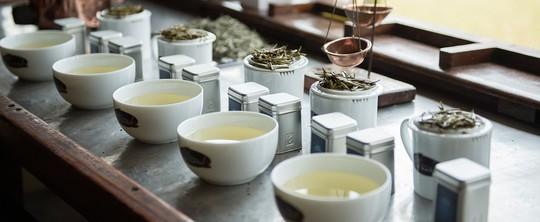 Bạch trà đắt nhất thế giới có gì đặc biệt? - Ảnh 6.