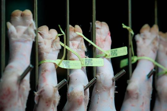 TP HCM: Thịt heo không rõ nguồn gốc đầy chợ đầu mối! - Ảnh 7.