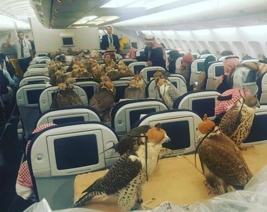 Thế giới phải ngả mũ trước thú ăn chơi của giới siêu giàu ở Ả Rập - Ảnh 7.