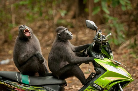 Chùm ảnh siêu hài hước về động vật thế giới 2017 - Ảnh 7.