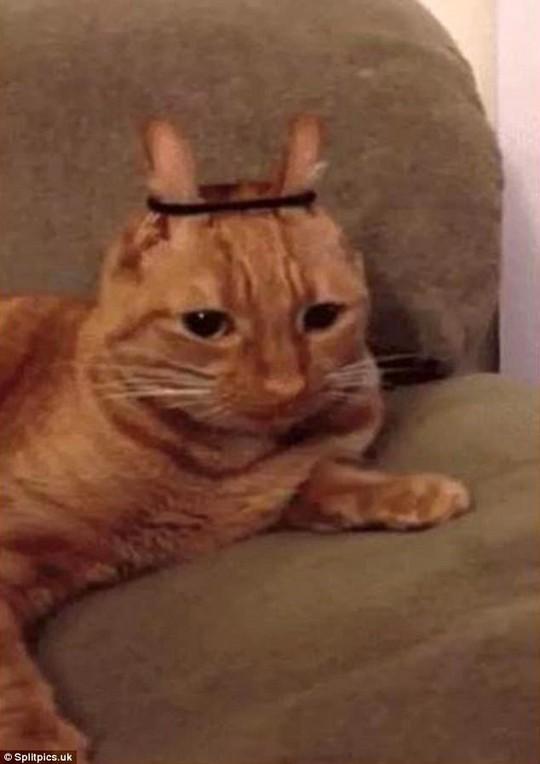 Những chú mèo có bộ lông độc đáo ai cũng phải bật cười - Ảnh 8.