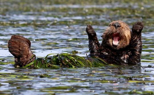 Chùm ảnh siêu hài hước về động vật thế giới 2017 - Ảnh 8.
