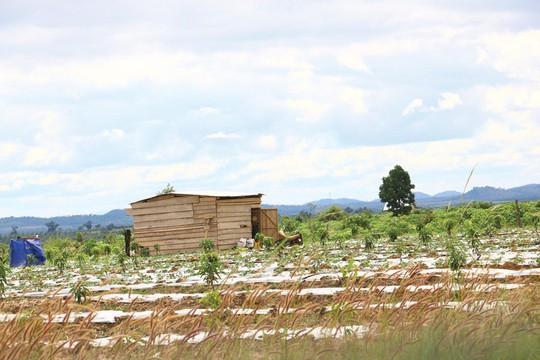 Lại rầm rộ phá rừng Tây Nguyên: Nhẹ tay xử lý cán bộ - Ảnh 1.