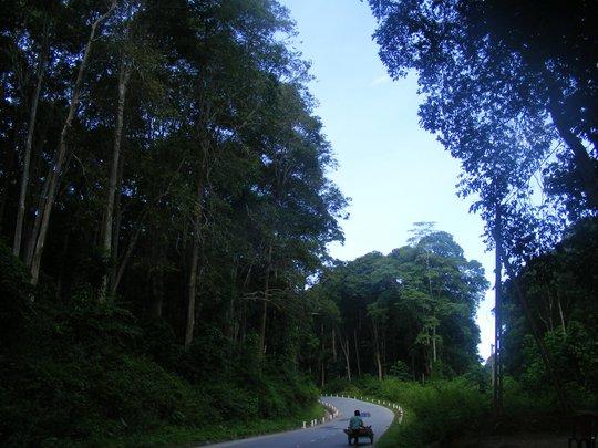 Dồn sức giữ rừng (*): Lao vào cuộc chiến - Ảnh 1.