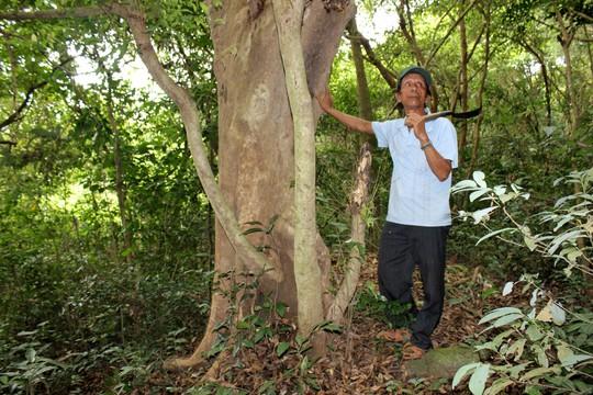 Dồn sức giữ rừng (*): Lao vào cuộc chiến - Ảnh 2.