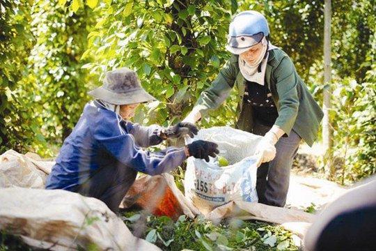 Nông sản Việt và thách thức từ Campuchia - Ảnh 1.