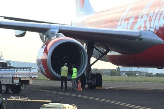 Máy bay hạ cánh khẩn vì bị chim chui vào động cơ - Ảnh 1.