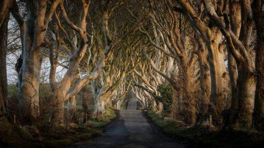Con đường ma mị trong Game of thrones thành điểm tham quan nổi tiếng - Ảnh 1.