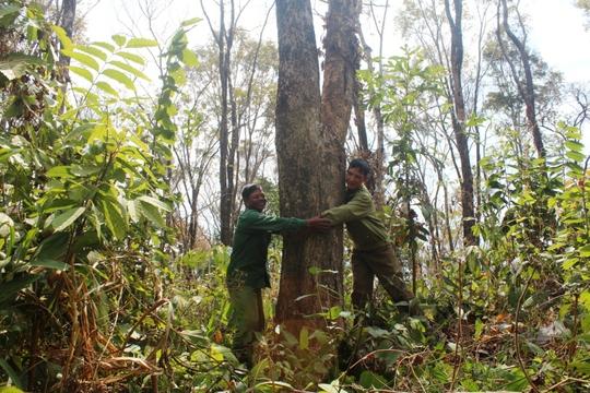 Dồn sức giữ rừng: Chặn bước lâm tặc - Ảnh 1.