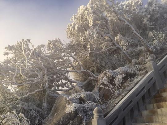 Cận cảnh đỉnh Fansipan trắng xóa trong băng tuyết - Ảnh 10.