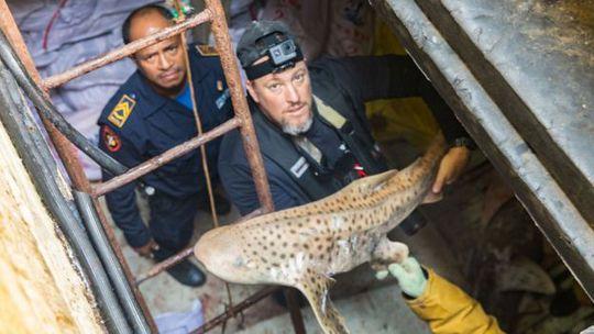 """Đông Timor chặn 10 tàu Trung Quốc săn bắt """"hàng ngàn con cá mập"""" - Ảnh 2."""