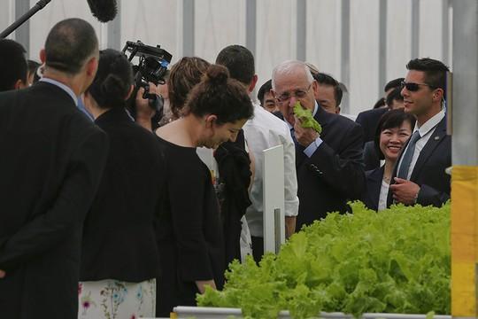 Tổng thống Israel Reuven Ruvi Rivlin đã tự tay hái rau sạch tại Khu nhà kính VinEco Tam Đảo và ăn ngay tại vườn