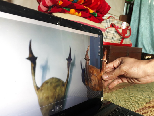 Chiếc sừng của anh M. rất giống với chiếc sừng cheo được rao bán trên mạng