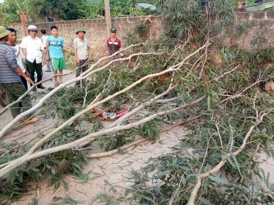 Hiện trường vụ cây đổ đè 3 em học sinh bị thương - Ảnh: Nghĩa Đàn