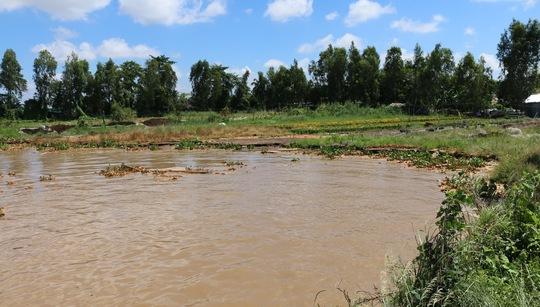 Sông sạt lở, nuốt dần làng hoa cồn An Thạnh - Ảnh 2.