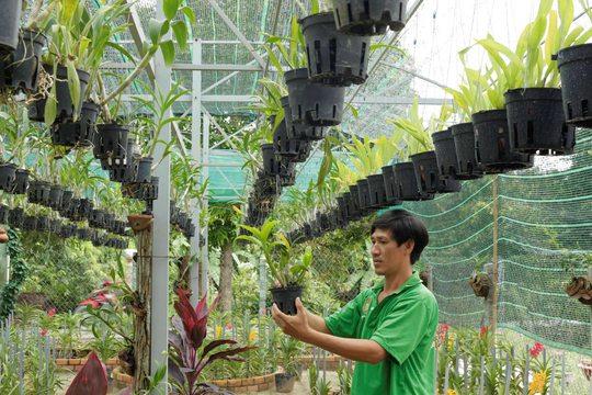Nông nghiệp gắn với homestay trên quê hương Bác Tôn - Ảnh 5.