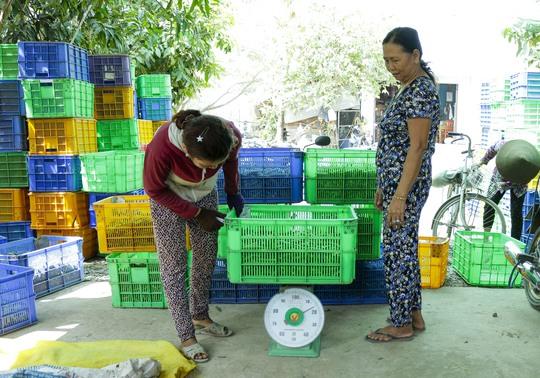 Mỗi ngày, nông dân vùng biên cung cấp từ 12-15 tấn đậu bắp Nhật