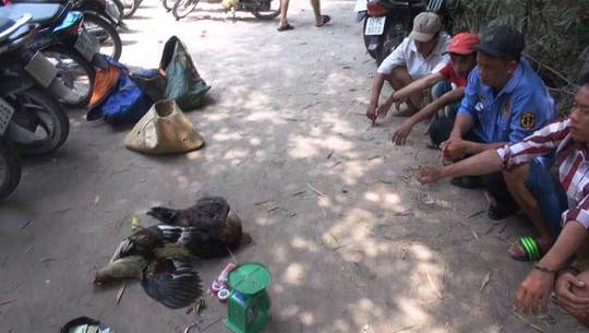Tang vật và các con bạc bị bắt quả tang tại trường gà