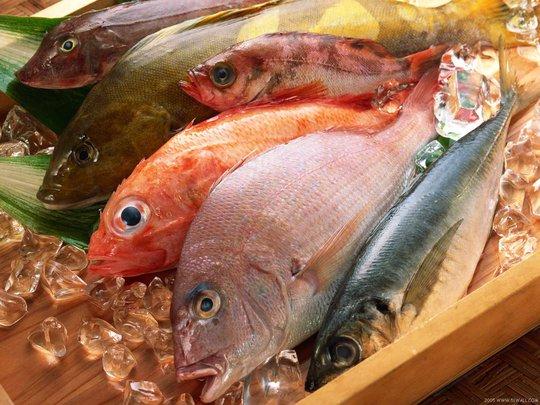 Ăn cá tươi roi rói tốt hơn hay ăn cá đã chết? - Ảnh 2.