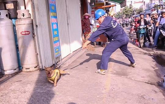 Chủ ngơ ngác nhìn chó thả rông bị bắt - Ảnh 1.